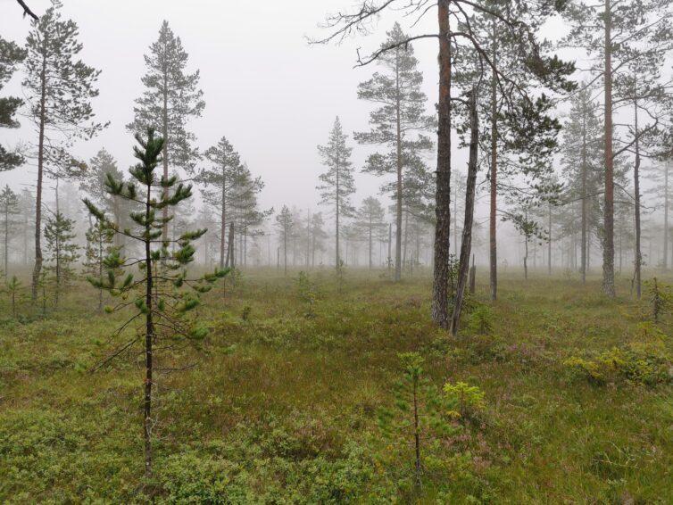 Fina prestationer i Lögdö vildmark