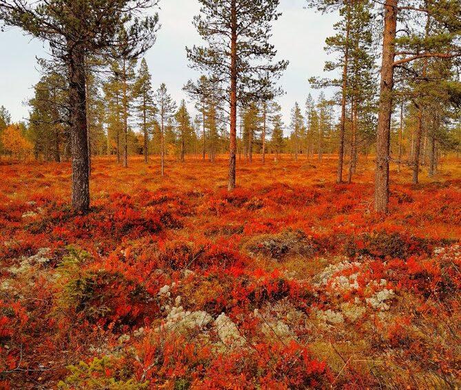 Höstens andra och sista utlysta jaktprov i Medelpad